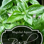 Magickal Aspects of Basil