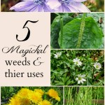 5 Common Weeds and Their Magickal Properties