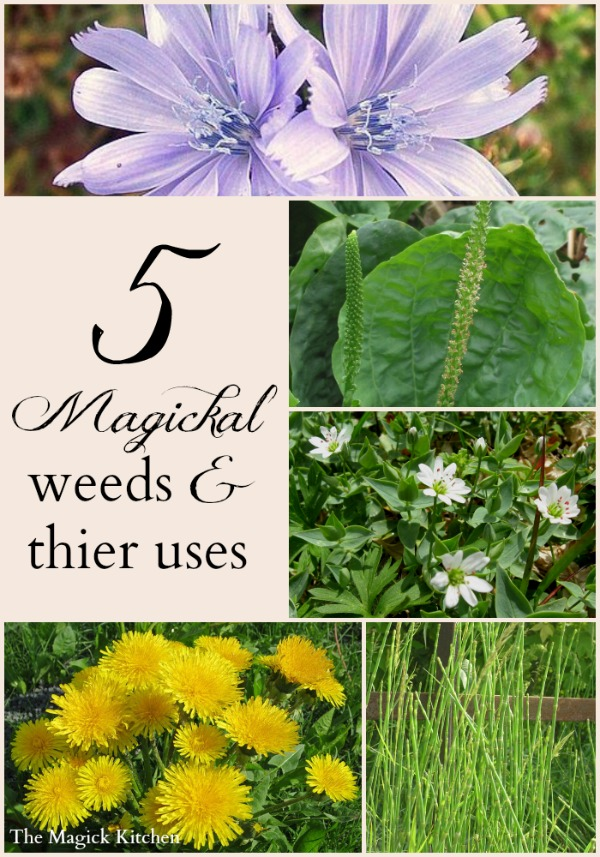 5MagickalWeeds