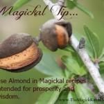 Magickal Tip Almond