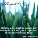 Magickal Tip – Aloe Vera