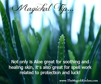 The Magick Kitchen Magickal Tips Aloe Vera