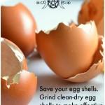 Magickal Tip Egg Shells