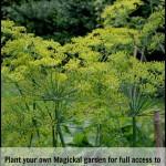 Magickal Tip – Plant a Magickal Garden