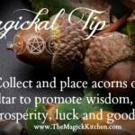 Magickal Tip Acorns